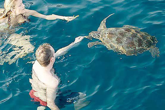 Luxury Sailing & Motor Catamaran feeding the turtles