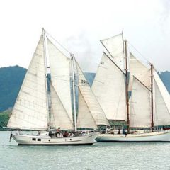 Classic Schooner Sailing Yacht with an old friend