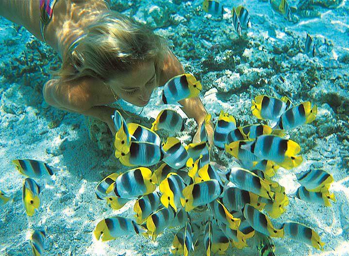 In amongst the Racha Reef Fish
